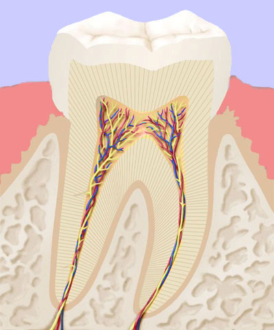 Endo 1 Zahnarzt Köln